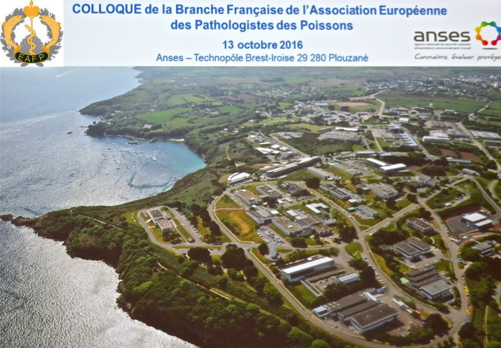 The 13th Meeting of the French EAFP Branch 13 October 2016 – Plouzané, Brittany